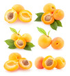 collection of apricot images