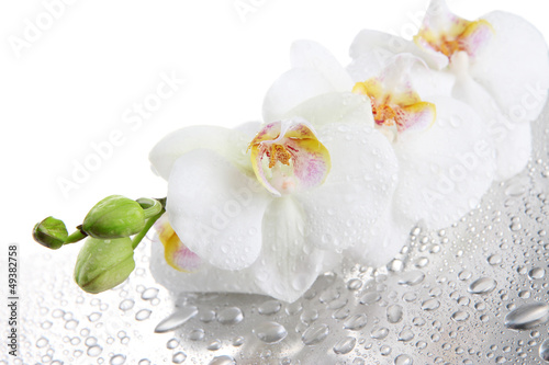 orchideen rollo digitaldruck selbst gestalten mit fotodruck. Black Bedroom Furniture Sets. Home Design Ideas