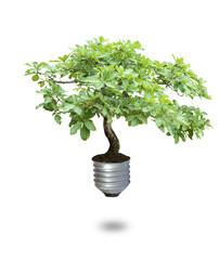 Bulb tree