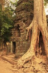 Ta Promh temple, Angkor area, Siem Reap, Cambodia