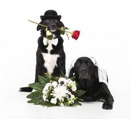 Hochzeit-Hunde