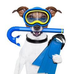 scuba dog
