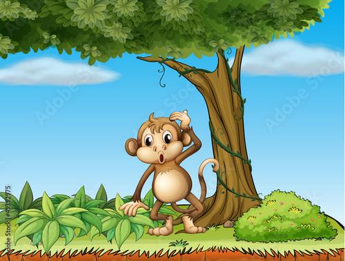 A monkey under a big tree
