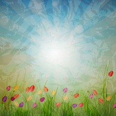 Summer Abstract Background with grass and tulips against sunny s