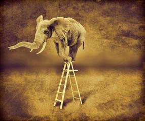 Elefante en una escalera
