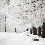 Fototapeta drzewo - zima - Las