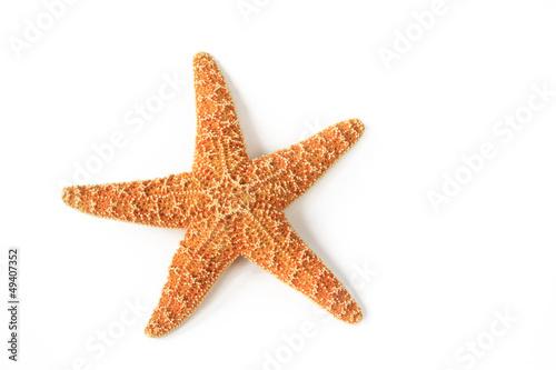 Leinwanddruck Bild Seestern (Asterias rubens)