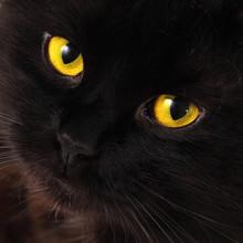 Black cat qui cherchent à vous avec des yeux jaunes lumineux