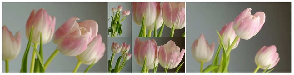 collage with pink tulips