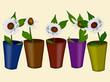 Chamomile flowers in a flowerpot