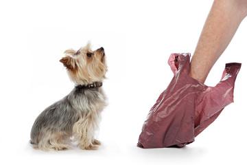 homme ramassant crottes de chien dans sachet