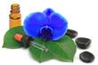 blaue orchidee mit tropfen