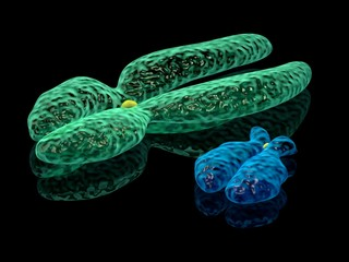 3d render illustration of X and Y chromosomes