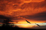 Fototapeta zachód - drzewo - Ptak
