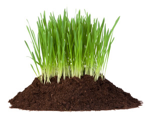 Young grass growing in a pile of soil