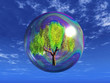 tree in a soap bubble