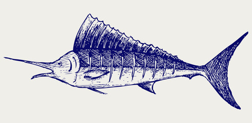 Sailfish saltwater fish. Doodle style