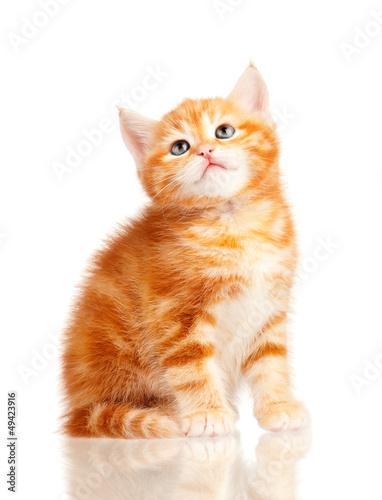The Warrior Cats 400_F_49423916_ZnbzjmbThS0yVq4I9D3MEVlCbV09ILRh