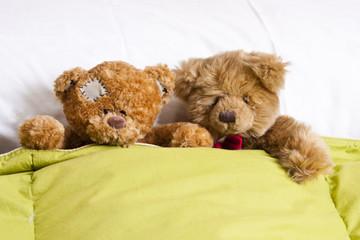 pareja de osos en la cama