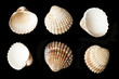 Set of sea ​​shells black isolated