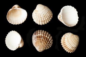 Set of sea shells black isolated