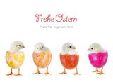 Fototapety Frohe Ostern – 4 Küken in bunten Eiern