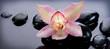 Fototapeten,spa,zen,steine,orchid