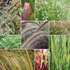 Gräser Collage, Gräser immer in Bewegung
