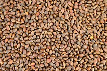 Cedar nuts in shell texture