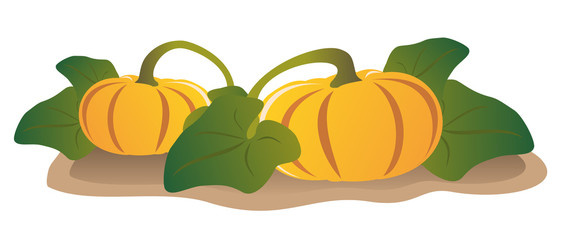 Two pumpkins on a garden-bed