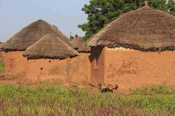 Mud huts and goat