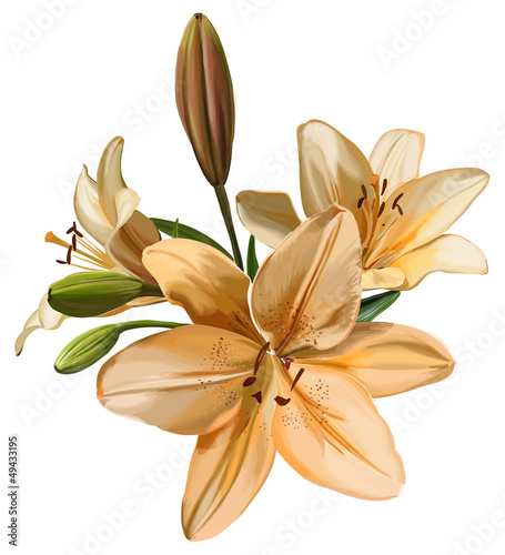 Branch of lily flowers