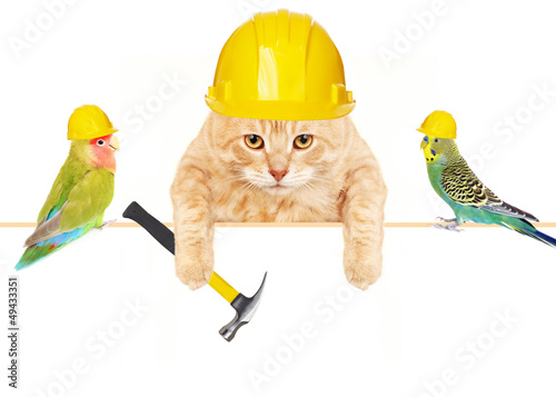 Cat with hammer and birds.