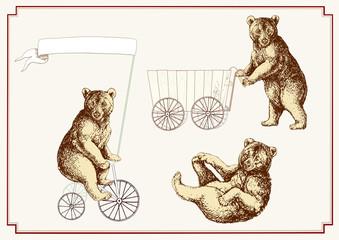 Drei Zirkusbären