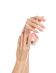 beautiful hands with a manicure keep gently rose