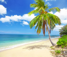beach with coconut palm and sea