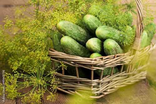 Harvest cucumbers in a basket
