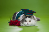 Cat dressed as General