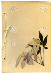 old photo album and dried flower on white background
