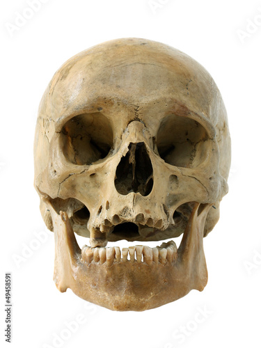 canvas print picture Human skull.