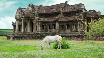 Horse rental in Angkor Wat