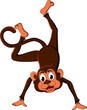 cute monkey cartoon expression
