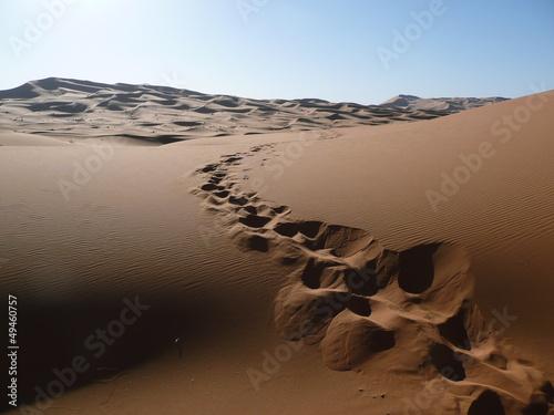 Fototapeten,dromedar,abdruck,morocco,sand