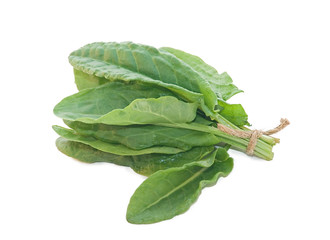 fresh sorrel on a white background