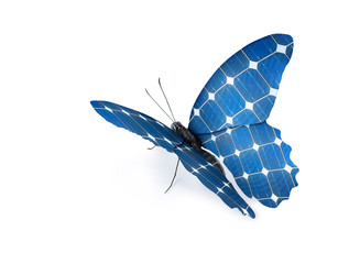 Öko Schmetterling