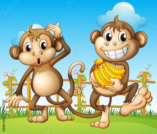 Zdjęcia na płótnie, fototapety na wymiar, obrazy na ścianę : Two monkeys with banana inside the fence