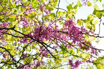 Fiori di albero in primavera_05