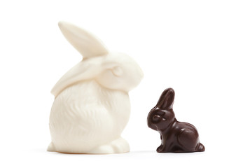 China white rabbit with small chocolate one, isolated on white