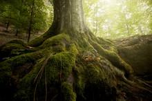 Arbre avec de la mousse sur les racines dans une forêt verte au printemps