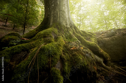tree with moss on roots in a green forest in spring